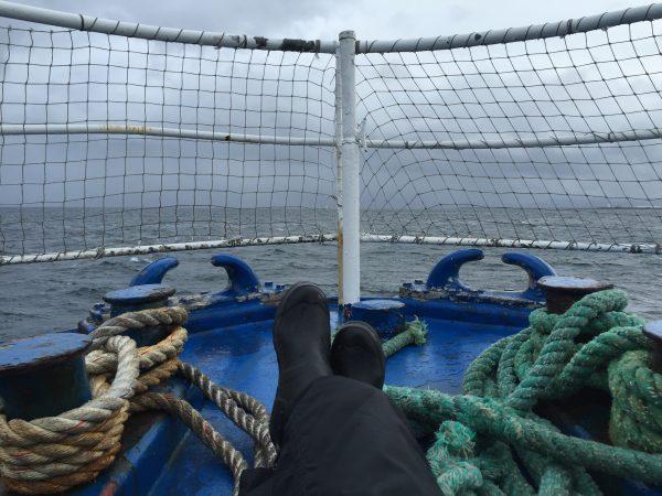 whale-hunting-safari-iceland